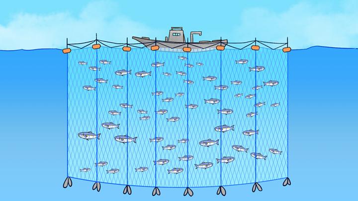 漁の仕方を説明するイラスト